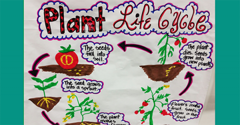 labeled diagram of plant life cycle